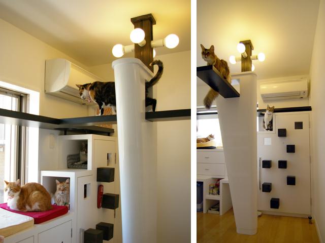 Vive bien mi gato en casa enriquecimiento ambiental en - Casa para gato ...